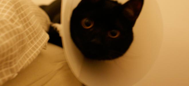 castração_cães_e_gatos