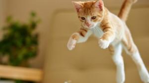 2 - gato pulando