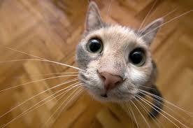4 - gato nariz