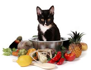 6 - comidas proibidas para gatos