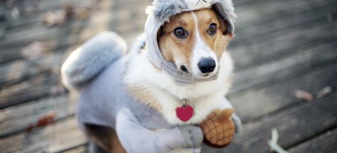 Conheça 3 curiosidades sobre a percepção canina