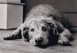cachorro_velho2