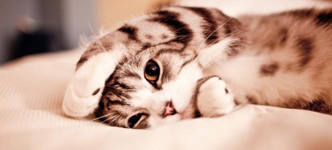 sete curiosidades que fazem dos gatos os reis do mundo