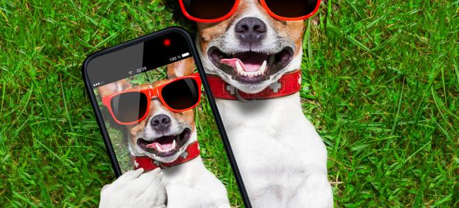 conheça os aplicativos para o seu pet