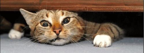gato_estressado